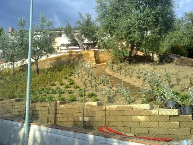 Simple vivai piante e eredi di vettori lanfranco giardini for Recinzioni in tufo